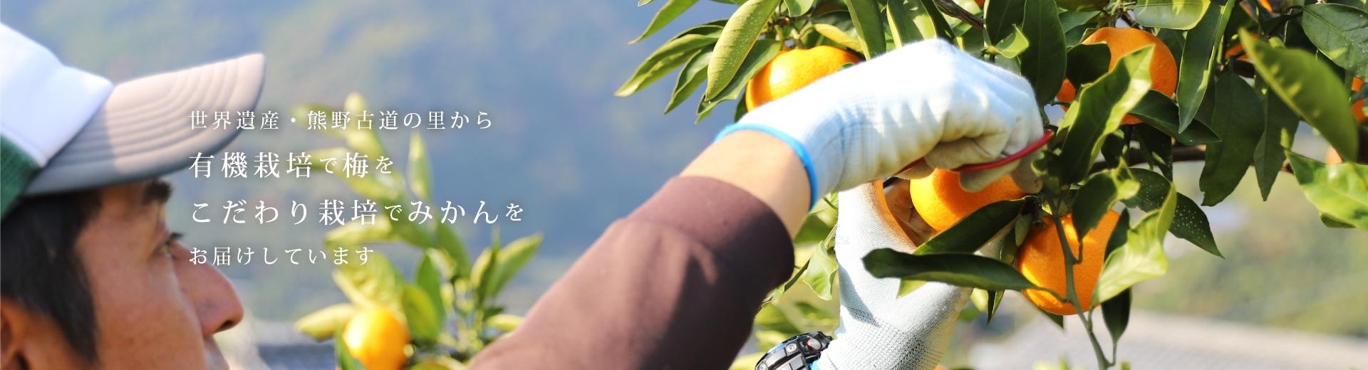 世界遺産・熊野古道の里で梅とみかんを有機栽培しています