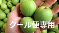 南高梅【クール便】