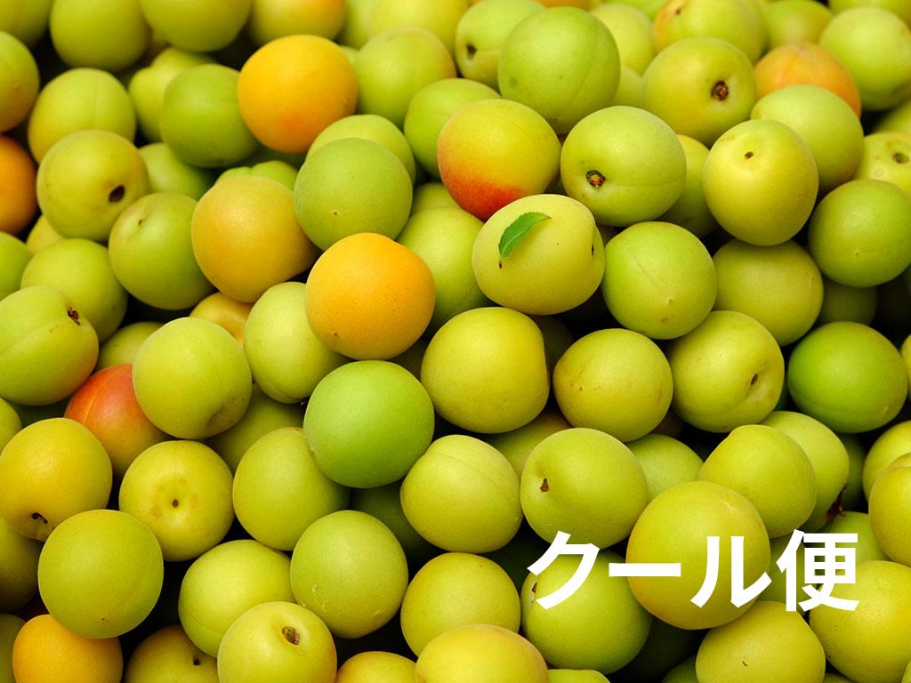 kanjyuku5-cool