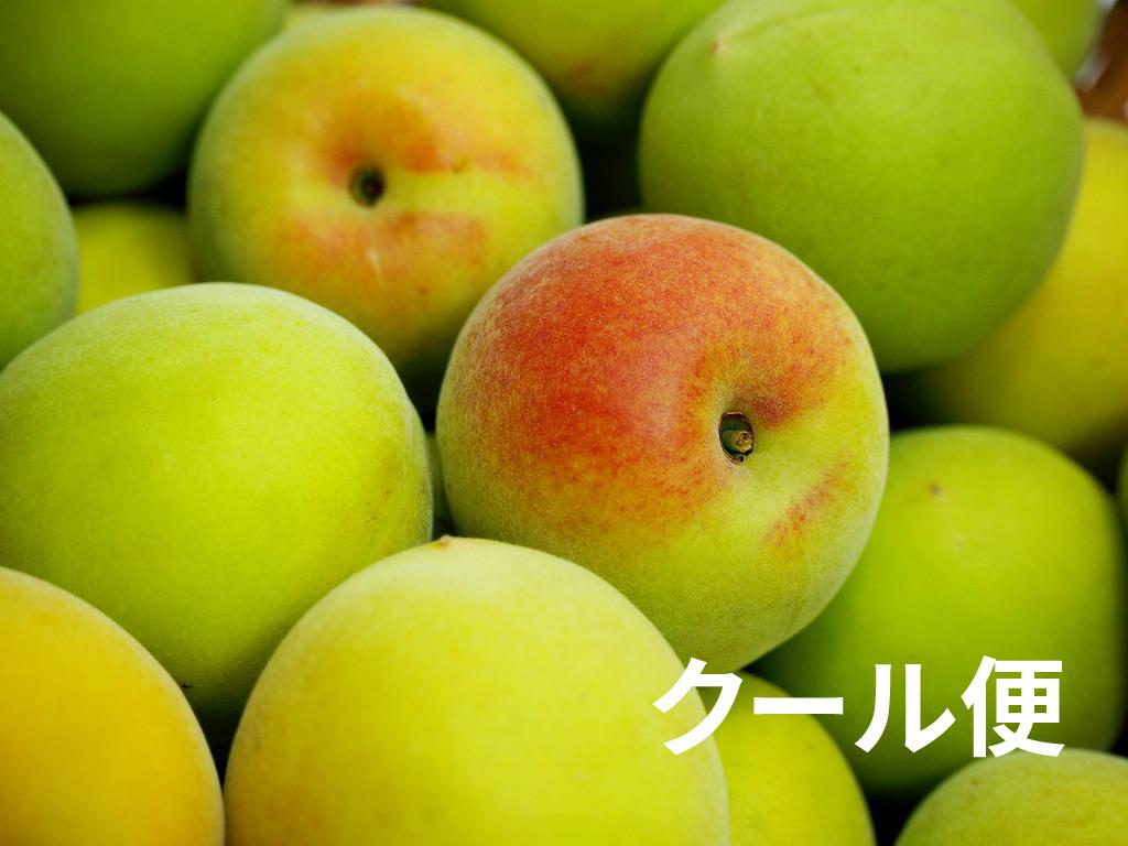 zouume5-cool